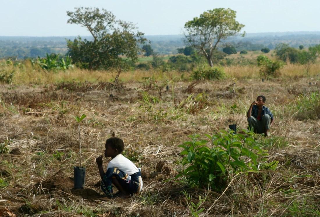 b2ae7-mosambik_zambezia_puun_istutusta_kukkaranta
