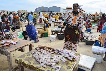 Women make less incomes with smaller and fewer fish on the local market.