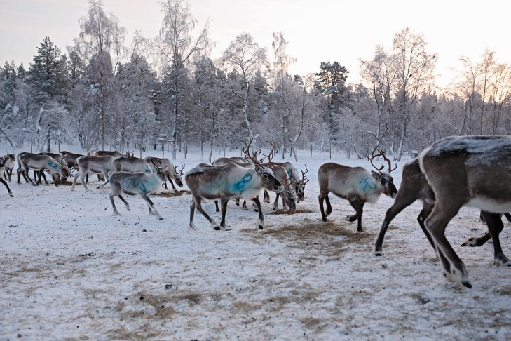 MuddusjarvenPaliskunta-Inari012018-KukkaRanta-web