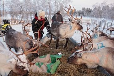MuddusjarvenPaliskunta-poropaimennus-JussaOsmoSeurujarvi-KukkaRanta-web